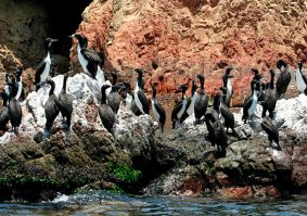 Ballestas Islands and Paracas National Reserve full day