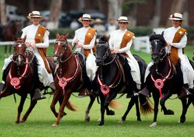 Tour and exhibition of Peruvian Paso horses (half day)